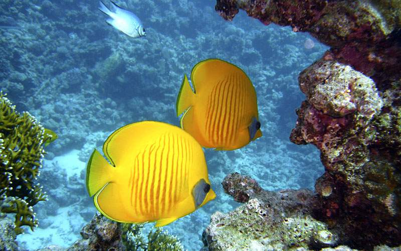 Tropical fish in New Caledonia