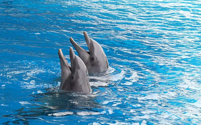 Swim with Dolphins in Nassau, Bahamas