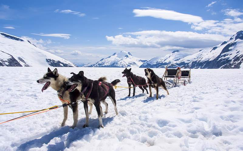 Dog Sled Excursion Oceania Cruises Alaska