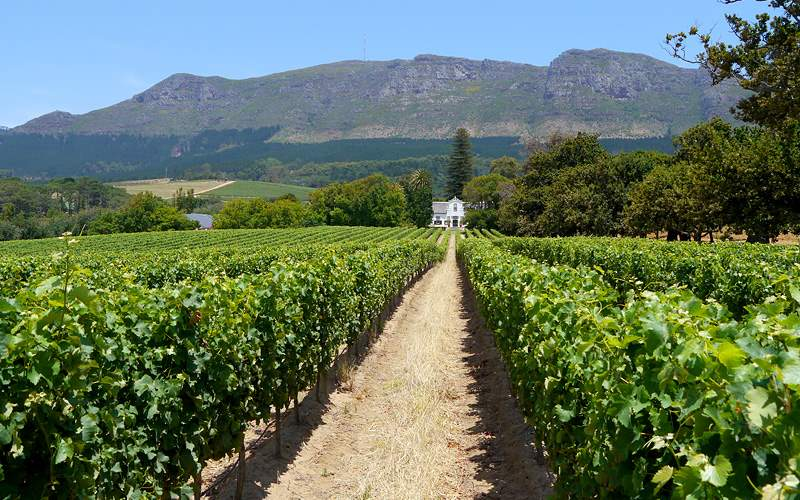 Grape farm Cape Town, South Africa Oceania Cruises