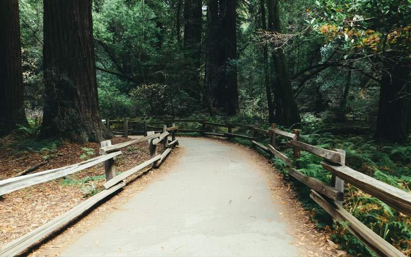 Muir Woods, home of the redwood forest