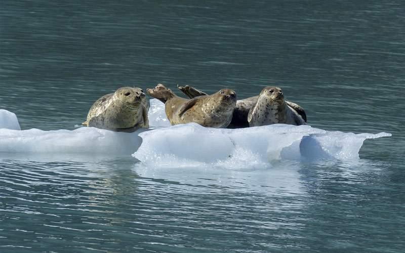 See unique wildlife in Antarctica