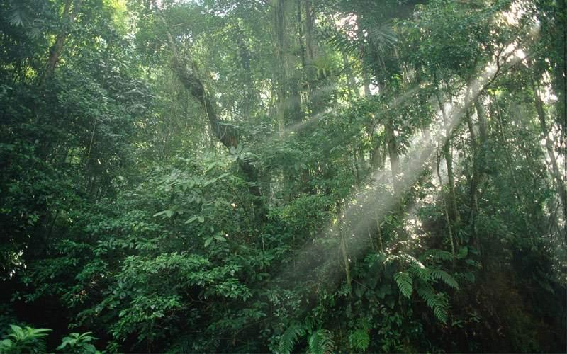 Asa Wright Nature Centre Princess Caribbean