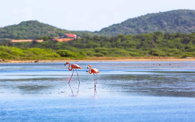 Flamingos in Bonaire Southern Caribbean Princess