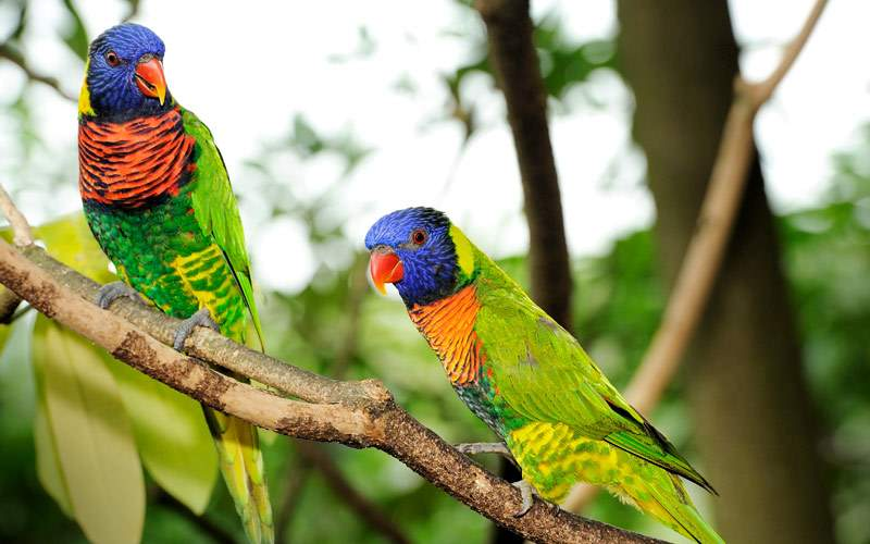 Jurong Bird Park, Singapore Princess Cruises Asia