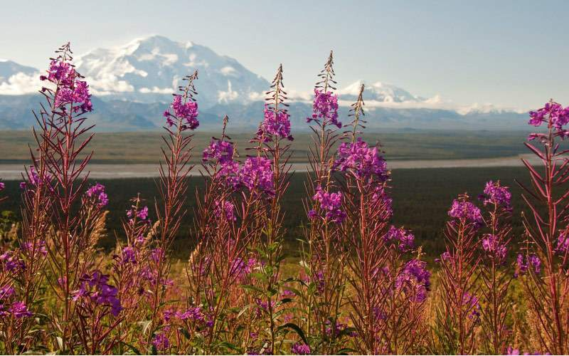 A scenic view of Mt. McKinley from Denali
