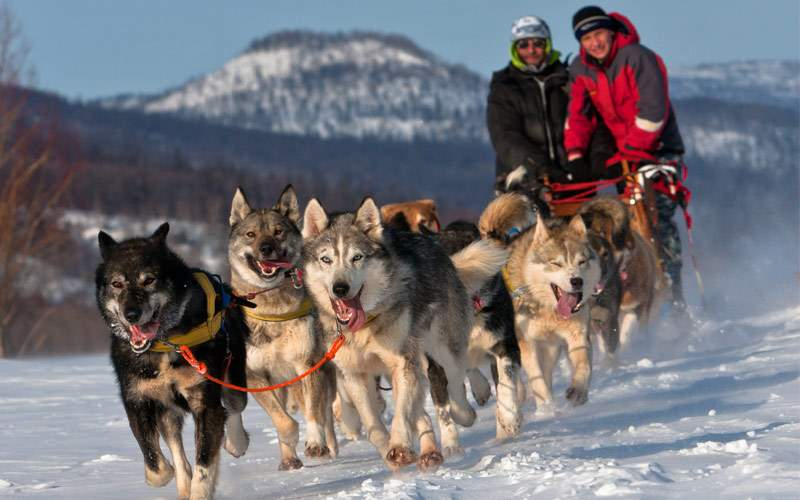 Race a dog team in Russia on Kamchatka Peninsula