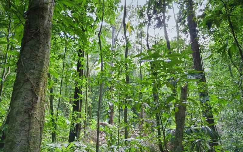 Tropical rainforest in Costa Rica Regent Seven Sea
