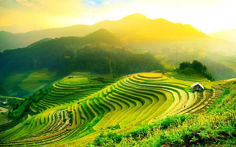Rice fields on Terraced of Mu Cang Chai Yenbai Vie