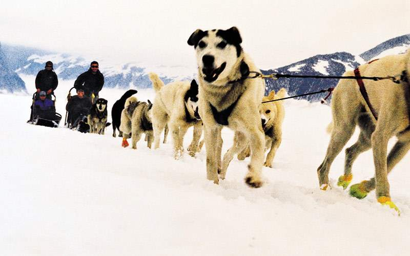 Royal Caribbean Alaska Cruisetour Sled Dogs