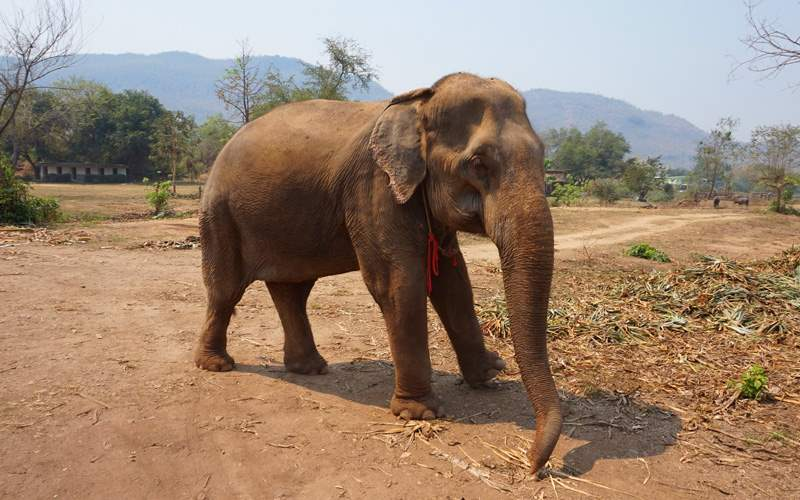 See elephants in Thailand