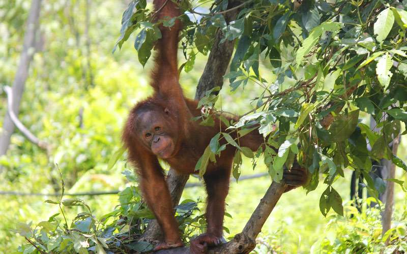 Visit an orangutan sanctuary
