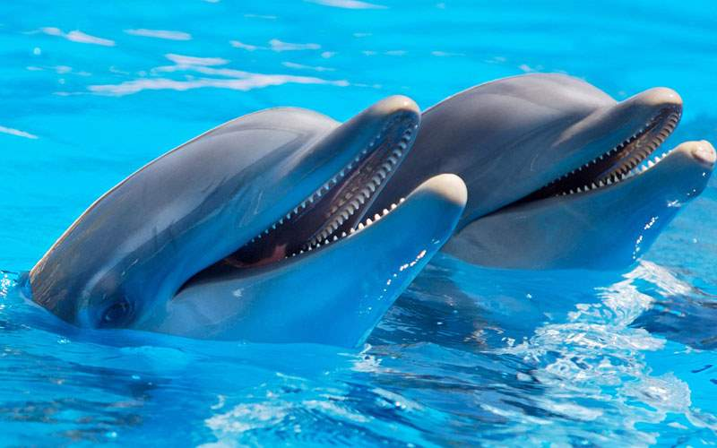 Swimming with Dolphins in the Caribbean