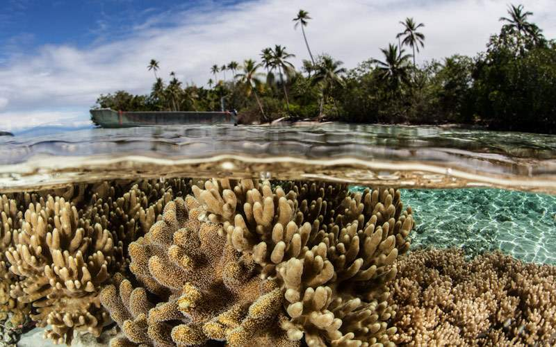 Shallow coral reef in the Solomon Islands