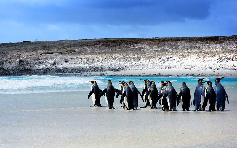 Penguins in Falkland Islands Silversea Expedition