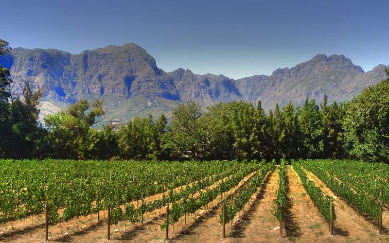 Vineyard in Franschhoek Cape Town Silversea Africa