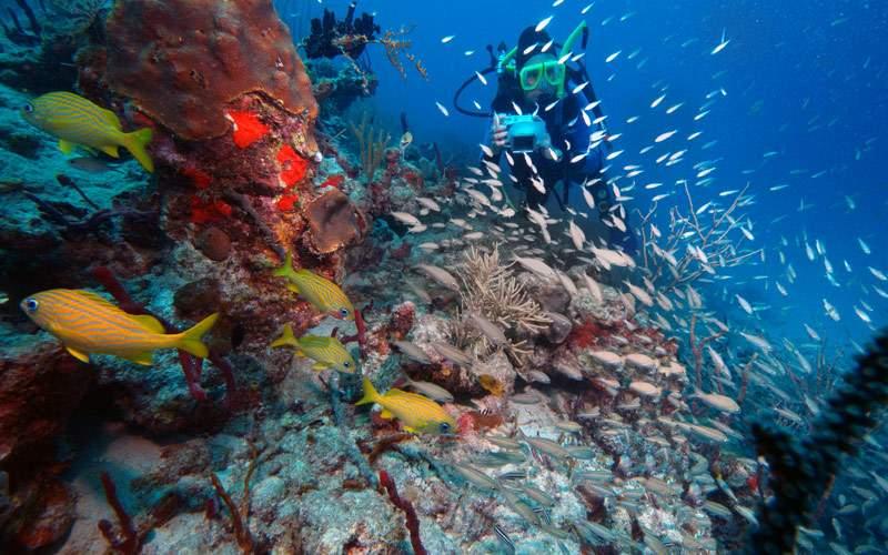 Underwater photographer coral Reef Virgin Islands