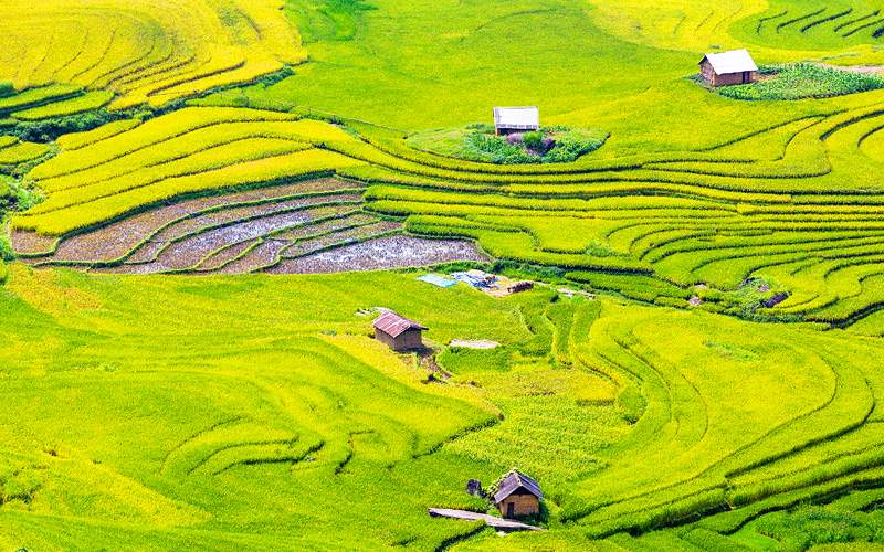 Terraced rice fields Lao Cai Vietnam Uniworld Asia