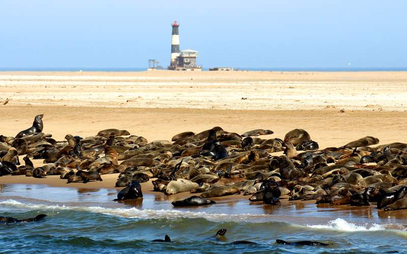See seals in Namibia