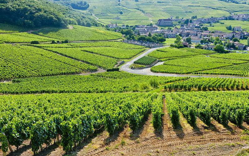 Vineyards near Burgundy France Viking River Europe