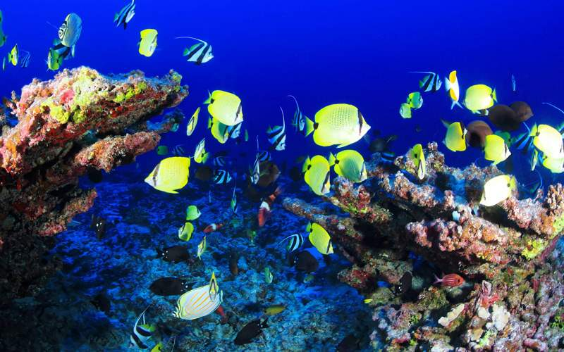 Coral Reef in the Southern Caribbean - Windstar