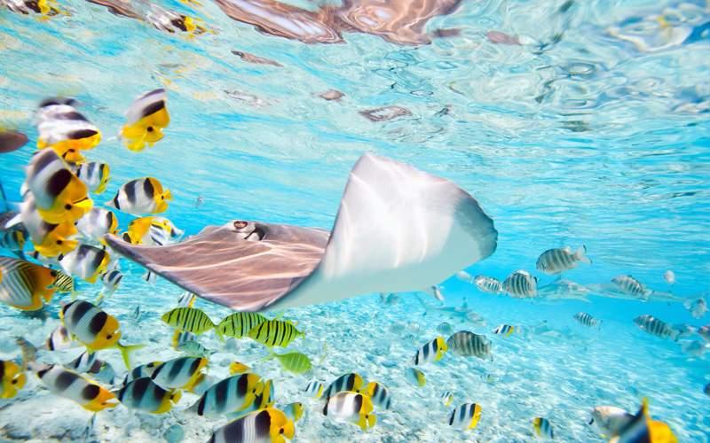 Windstar South Pacific Cruises Bora Bora Lagoon