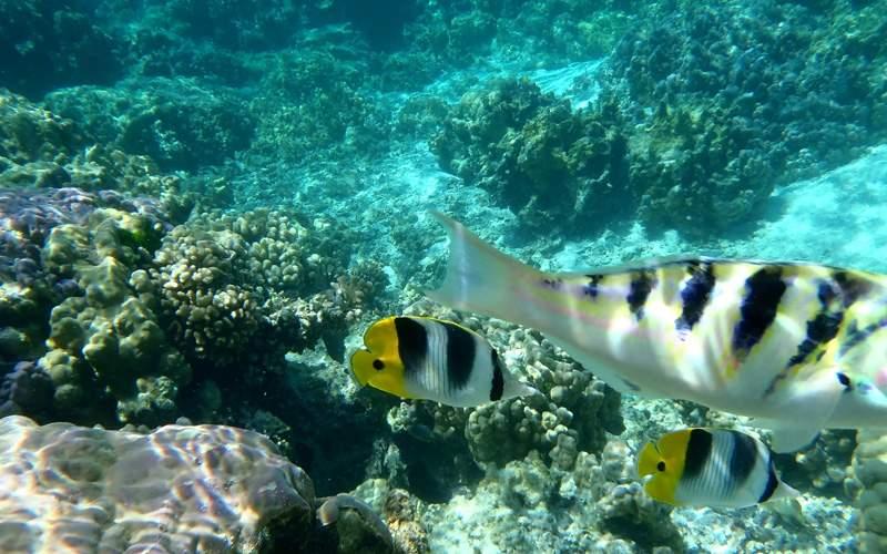 Windstar South Pacific cruises Taara Island