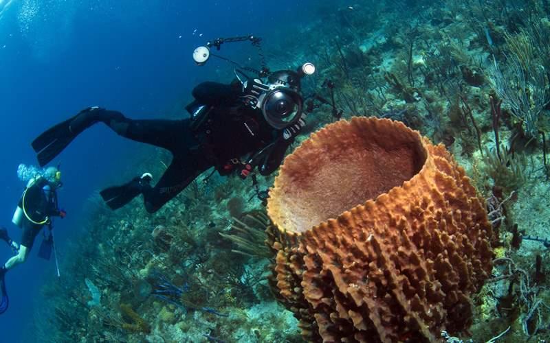 Windstar Caribbean Scuba Diver