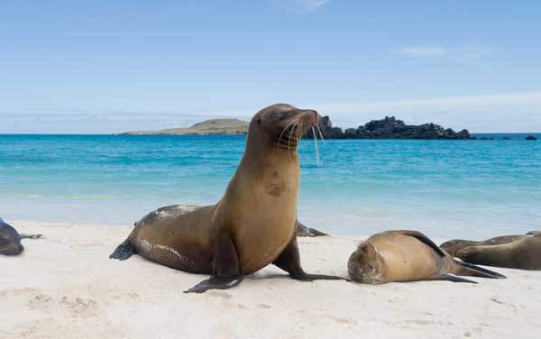 Celebrity Cruises-Isla Baltra, Galapagos Islands