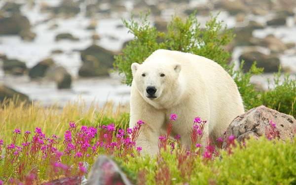 Silversea Cruises-Churchill, Manitoba