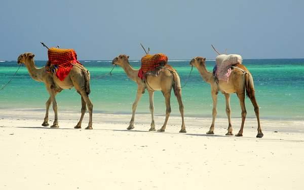 Regent Seven Seas Cruises-Africa