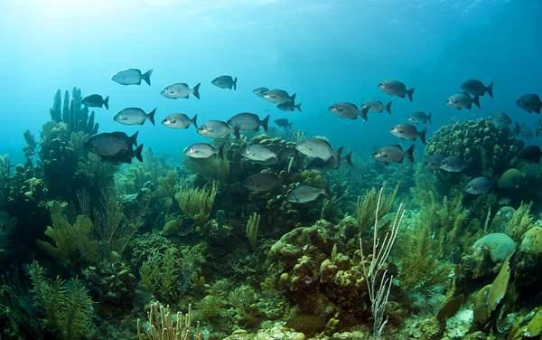 Regent Seven Seas Cruises-Bermuda
