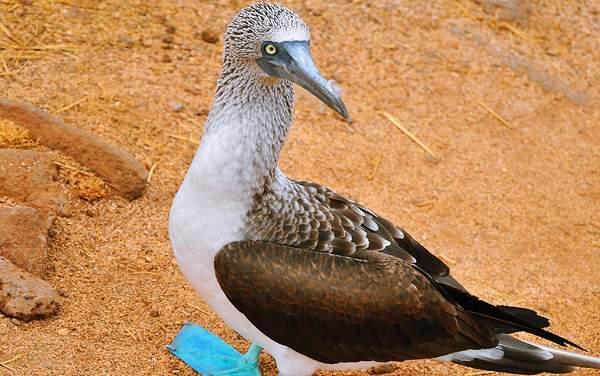Silversea Cruises-Galapagos