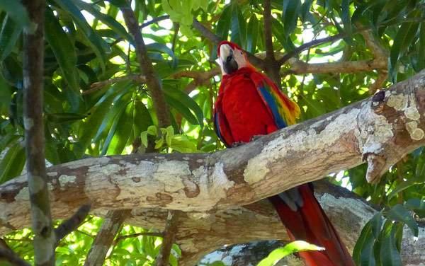 Windstar Cruises-Costa Rica