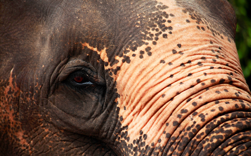 Beautiful elephant Asia Azamara