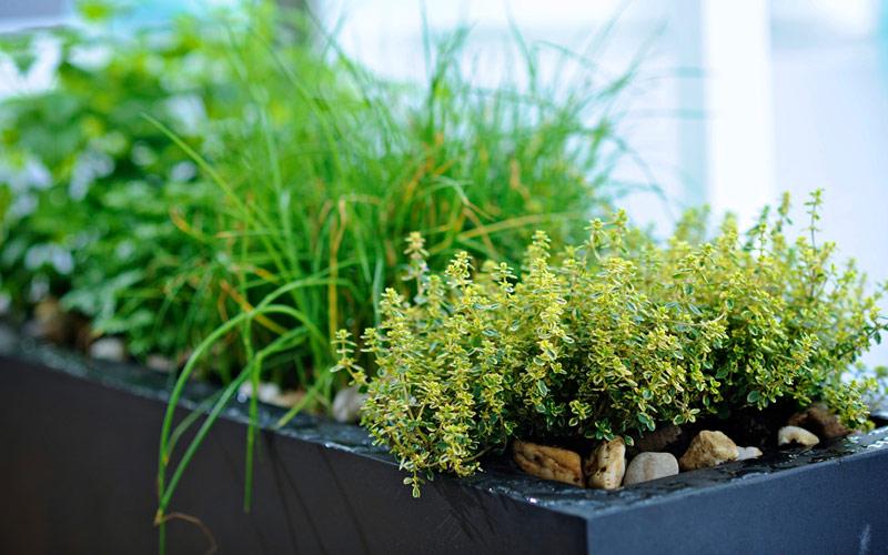 Avalon Waterways Avalon Visionary herb garden