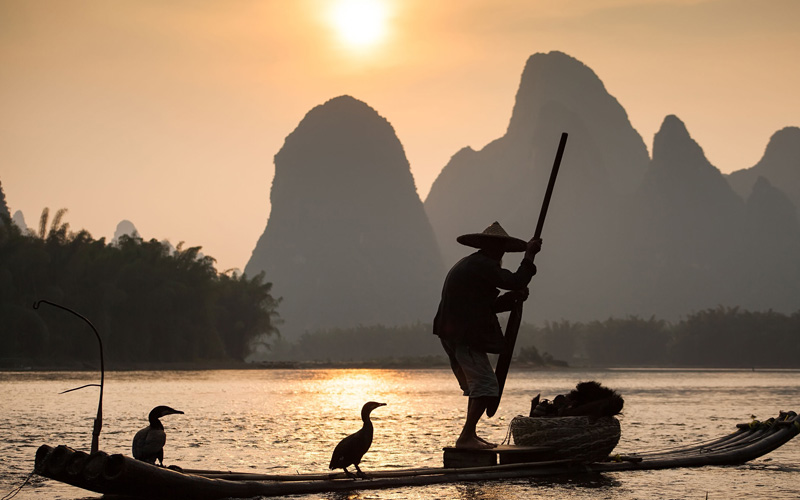In China trained cormorants are used to fish
