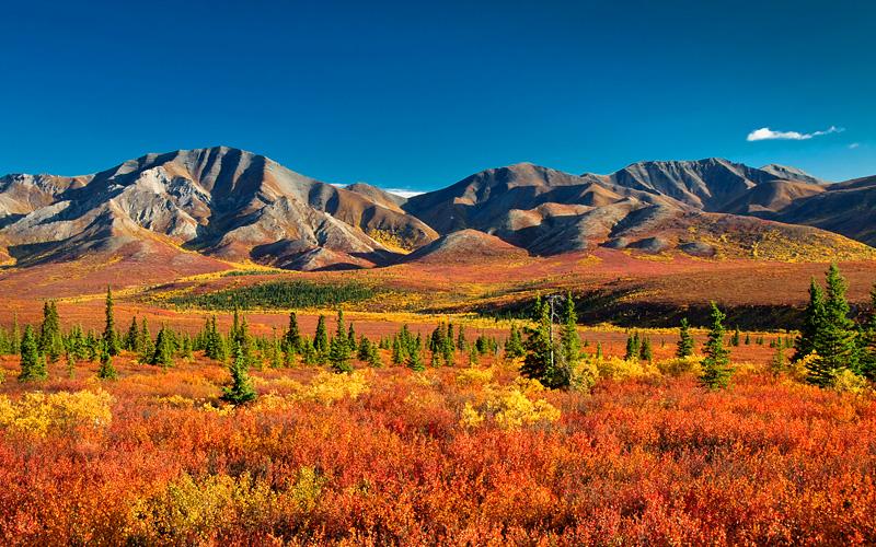 Denali State Park in autumn