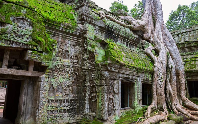 Ta Prohm Temple Siem Reap Cambodia Avalon Waterway