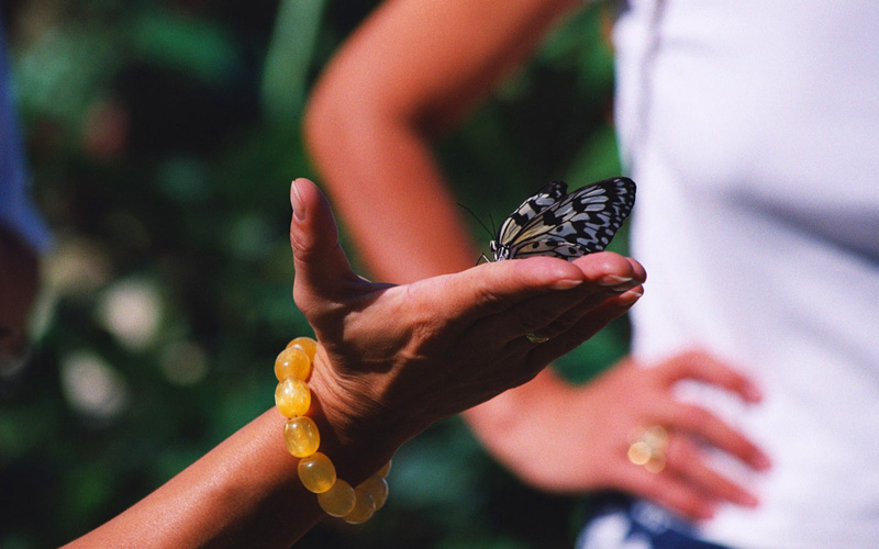 St Maarten Butterfly Farm Carnival Cruises