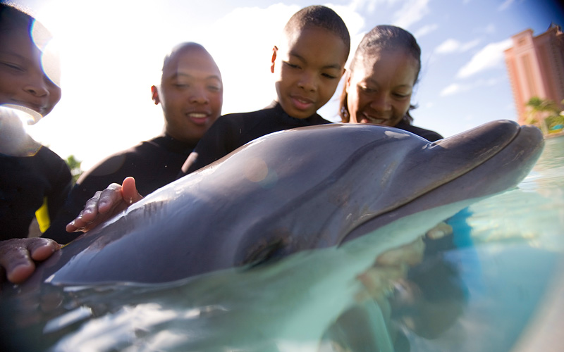 family plays with dolphin Carnival Cruises Mexico