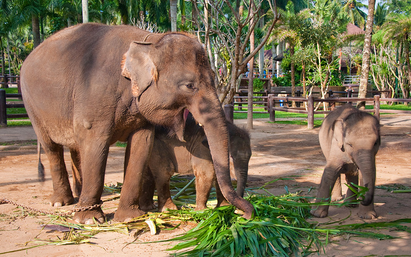 Bali Elephants Celebrity Cruises Asia