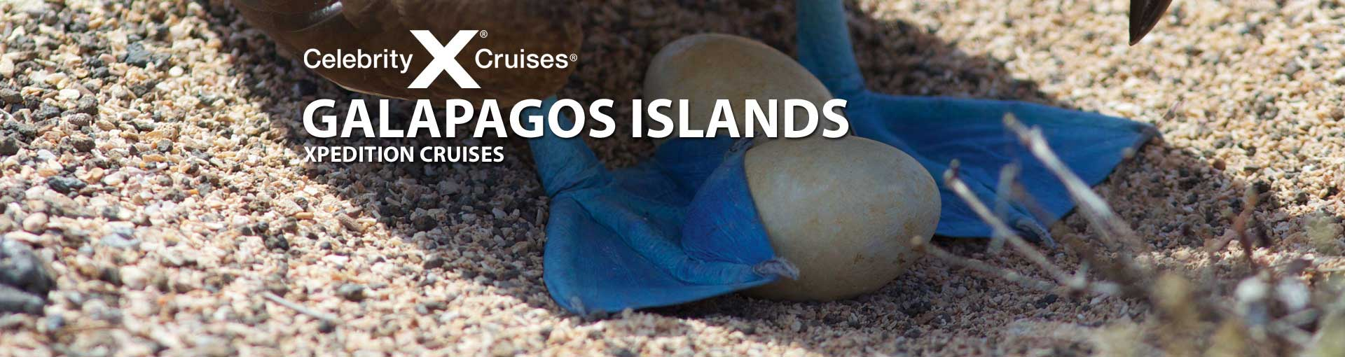 Celebrity cruises to the galapagos islands