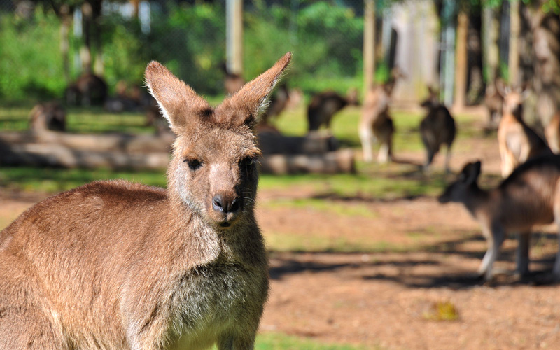 kangaroo reserve Celebrity Cruises