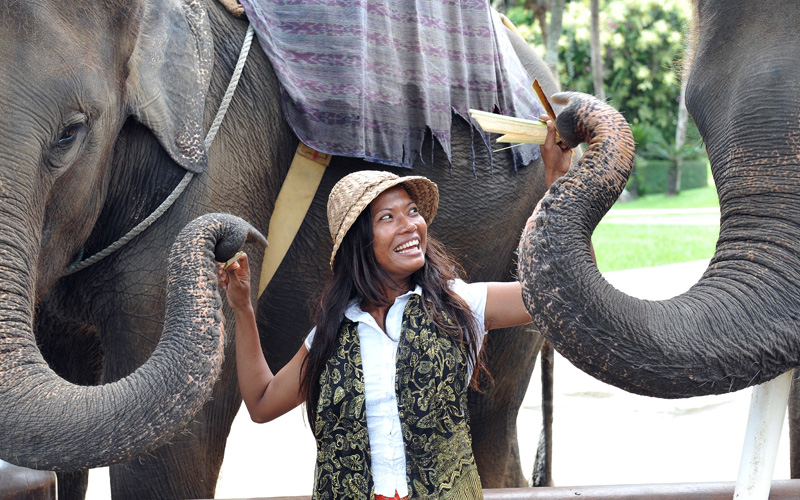 elephant safari in Indonesia Celebrity Cruises