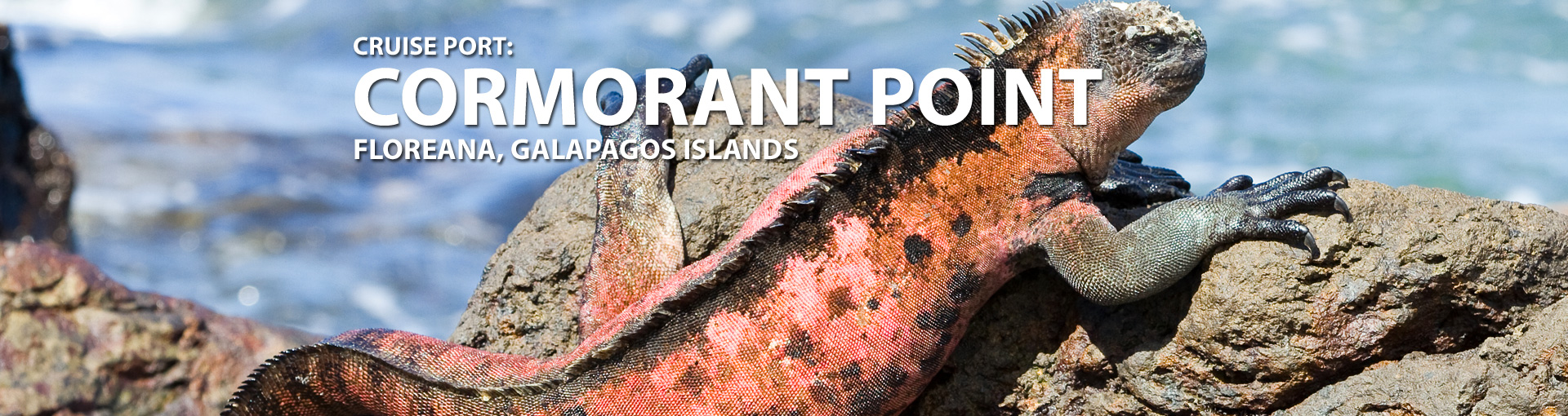 Cruises to Cormorant Point, Galapagos Islands