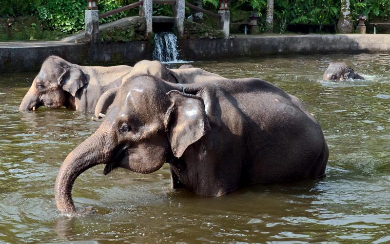 Elephant show Bali island Indonesia Crystal Cruise