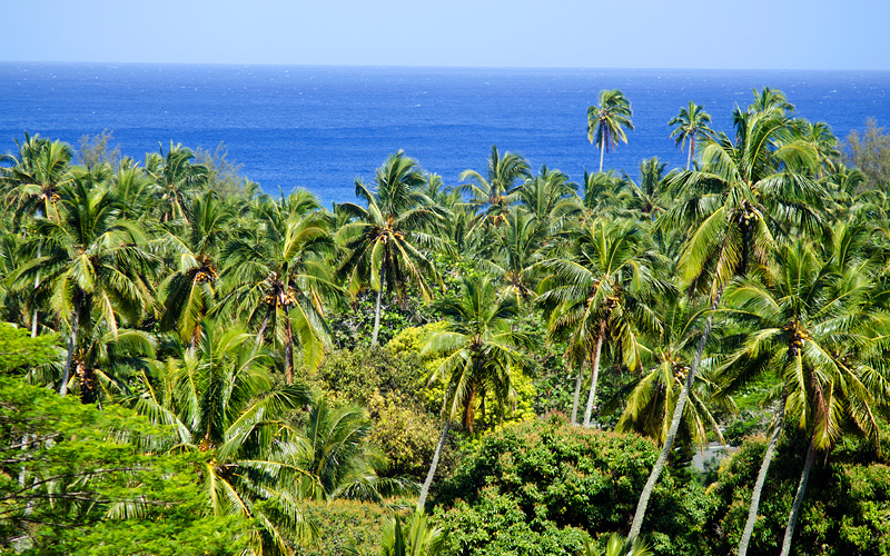 Forest of Rarotonga, Cook Islands Crystal Cruises
