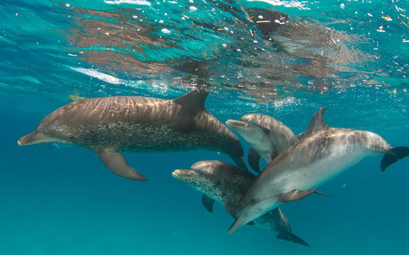Dolphins Bahamas
