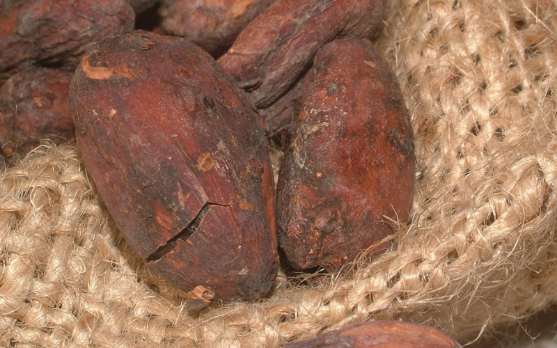 Cacao from the Dominican Republic